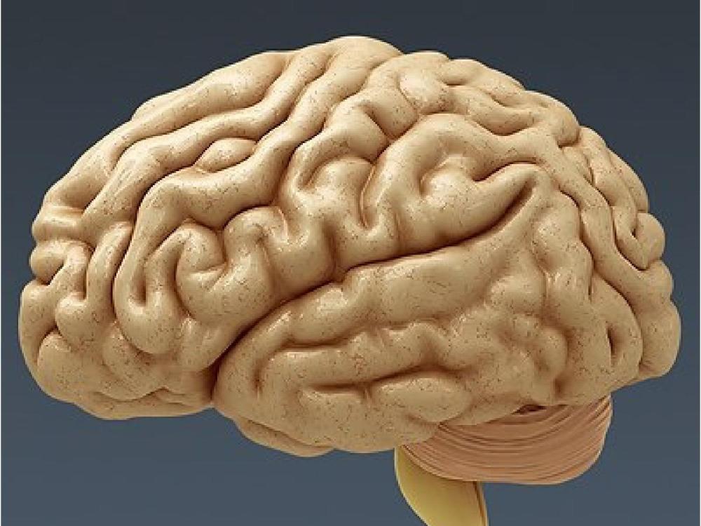 علماء يكشفون كيف يبني المخ الذاكرة الاستشعارية-2