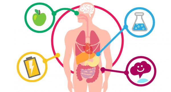 العوامل التي تؤثر على معدل الأيض