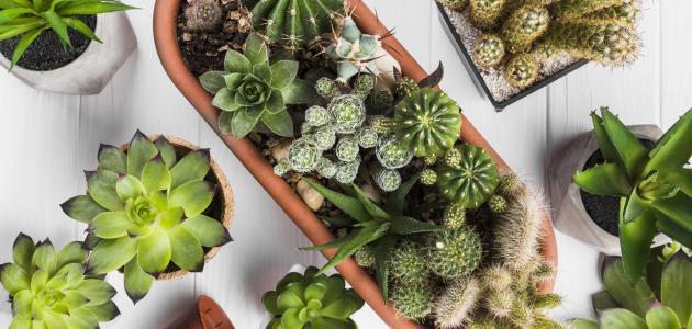 خطوات للعناية بالنباتات بشكل صحيح-1