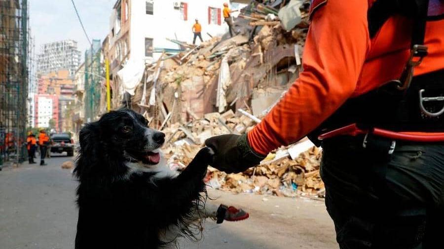 كلب تشيلي في انفجار بيروت - دنيا يا دنيا ١