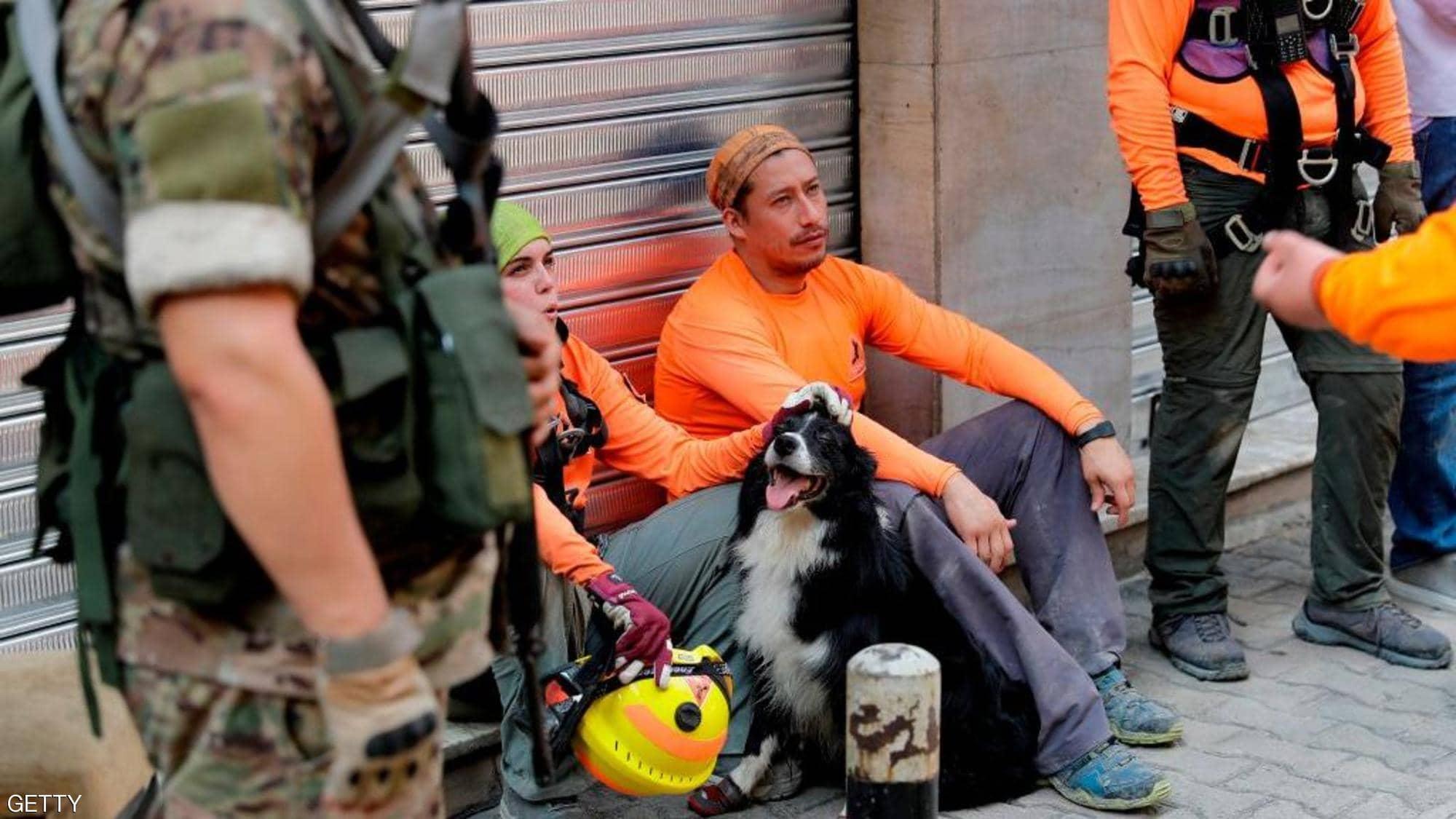 كلب تشيلي في لبنان بعد الانفجار - دنيا يا دنيا