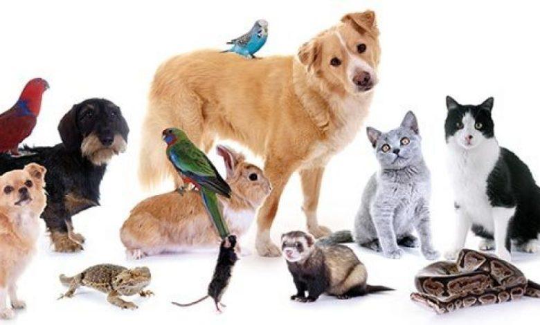 ماذا يعني  اصطحاب حيوان أليف في المنزل ؟ وما  والقيمة الحقيقية لوجوده..؟-1