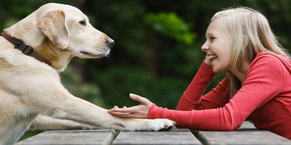 ماذا يعني  اصطحاب حيوان أليف في المنزل ؟ وما  والقيمة الحقيقية لوجوده..؟-2