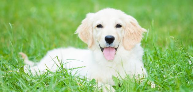 ماذا يعني  اصطحاب حيوان أليف في المنزل ؟ وما  والقيمة الحقيقية لوجوده..؟-5