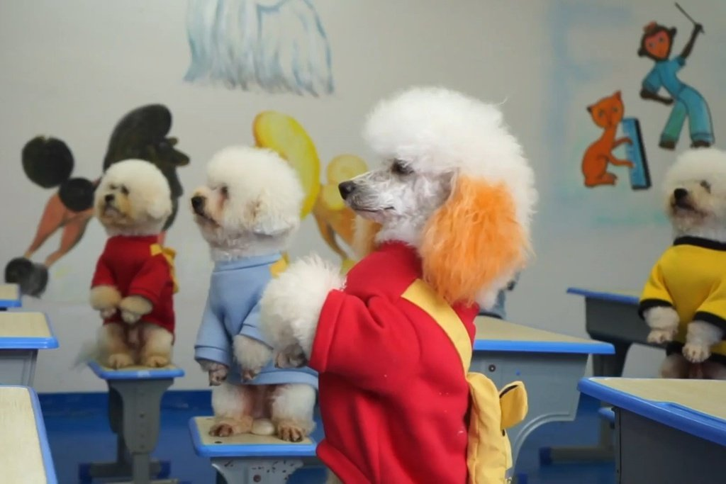 Pet_school_in_China_teaches_dogs_maths_and_how_to_skip_rope.00_00_00_00.Still001